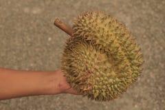Dê o presente com fruto quente dos durians em Tailândia Fotografia de Stock