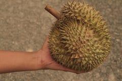 Dê o presente com fruto quente dos durians em Tailândia Fotos de Stock