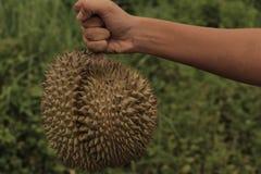 Dê o presente com fruto quente dos durians em Tailândia Fotografia de Stock Royalty Free