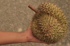 Dê o presente com fruto quente dos durians em Tailândia Fotos de Stock Royalty Free