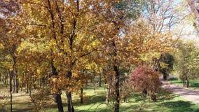 Día asoleado Árboles del otoño en un parque público metrajes