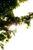 Día asoleado Foto de archivo libre de regalías
