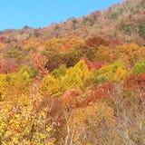 Día asoleado del otoño Imagen de archivo libre de regalías