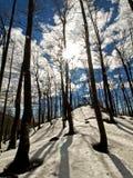 Día asoleado en bosque Foto de archivo