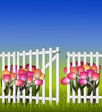 Día asoleado en la puerta y los tulipanes de la cerca del jardín Fotos de archivo