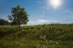 Día asoleado hermoso. Foto de archivo libre de regalías