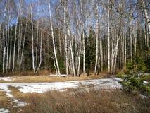Día caliente claro de la primavera en el bosque imágenes de archivo libres de regalías