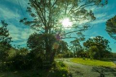 Día caliente con sol Fotografía de archivo libre de regalías
