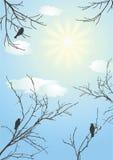Día claro. Mañana. Foto de archivo libre de regalías