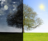 Día contra concepto del árbol de la noche Imagen de archivo
