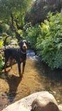Día de Dogy Imágenes de archivo libres de regalías