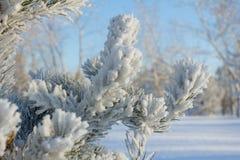 Día de fiesta alegre de la Navidad Feliz Año Nuevo Enhorabuena y regalos La Navidad, invierno, nieve Fotografía de archivo libre de regalías