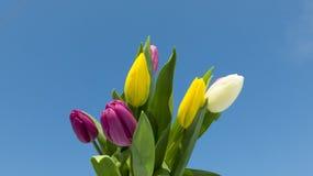 Día de fiesta del ` s de las mujeres de la primavera imagen de archivo libre de regalías