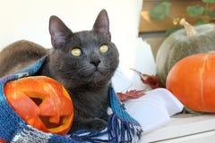 Día de fiesta de Halloween de la reunión junto Fotos de archivo libres de regalías