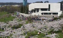 Día de fiesta japonés de la cereza Fotografía de archivo libre de regalías