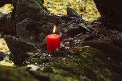 Día de fiesta otoñal vela en árbol con el musgo Foto de archivo
