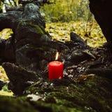 Día de fiesta otoñal vela en árbol con el musgo Imagenes de archivo