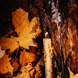 Día de fiesta otoñal vela en árbol con el musgo Imágenes de archivo libres de regalías