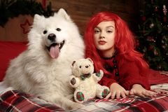 Día de fiesta y la Navidad del perro del invierno Una muchacha en un suéter hecho punto y con el pelo rojo con un animal doméstic Fotos de archivo libres de regalías