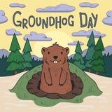Día de Groundhog Groundhog lindo que mira hacia fuera de la madriguera en bosque del pino y fondo pintorescos del cielo de la mañ Imagen de archivo libre de regalías