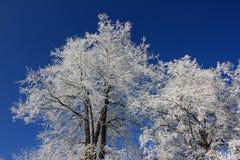 Día de invierno Fotos de archivo libres de regalías
