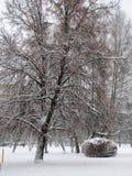 Día de invierno Imagen de archivo libre de regalías