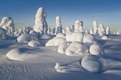 Día de invierno asoleado foto de archivo libre de regalías