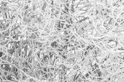 Día de invierno brumoso Cubrieron a Frost las ramas con el foco suave de la escarcha Foto de archivo libre de regalías