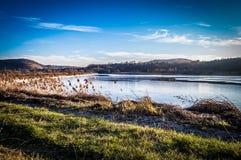Día de invierno en el lago Foto de archivo