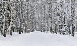Día de invierno en el parque fotografía de archivo