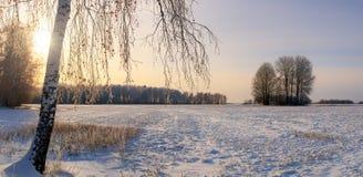 Día de invierno en un campo con el abedul, Rusia, Ural Imagen de archivo libre de regalías