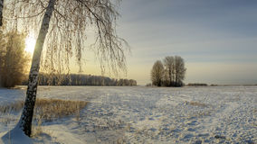 Día de invierno en un campo con el abedul, Rusia, Ural Fotografía de archivo libre de regalías