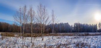 Día de invierno en un campo con el abedul, Rusia, Ural Imagenes de archivo