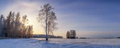 Día de invierno en un campo con el abedul, Rusia, Ural Imagen de archivo