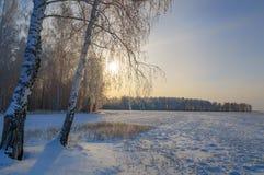Día de invierno en un campo con el abedul, Rusia, Ural Fotos de archivo