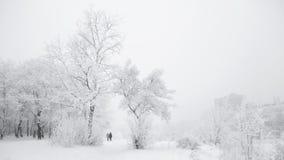 Día de invierno escarchado en un parque Fotografía de archivo libre de regalías
