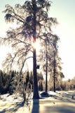 Día de invierno escarchado soleado en el bosque Fotos de archivo