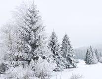 Día de invierno frío Fotos de archivo