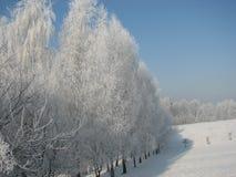 Día de invierno frío foto de archivo libre de regalías