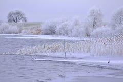 Día de invierno frío con la gran luz Fotos de archivo