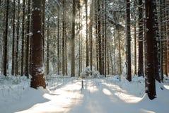 Día de invierno fresco Fotos de archivo libres de regalías