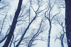 Día de invierno melancólico foto de archivo