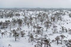 Día de invierno Nevado en el pantano Pequeños árboles del pantano imagen de archivo