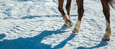 Día de invierno, pies que funcionan con el caballo Imagen de archivo