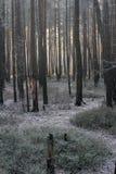 Día de invierno soleado Fotos de archivo