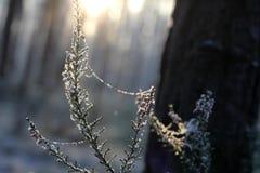 Día de invierno soleado Imágenes de archivo libres de regalías