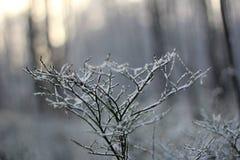 Día de invierno soleado Foto de archivo
