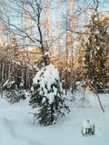Día de invierno soleado escarchado en el campo nevoso Árbol de abeto joven debajo de la cubierta abundante de la nieve Fotografía de archivo