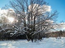 Día de invierno soleado escarchado en el campo nevoso Árboles, weared en vestidos festivos de la nieve Foto de archivo libre de regalías
