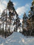 Día de invierno soleado escarchado en el campo nevoso Árboles, weared en vestidos festivos de la nieve Fotografía de archivo libre de regalías